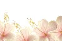 Praxis Fleur d'Aloha