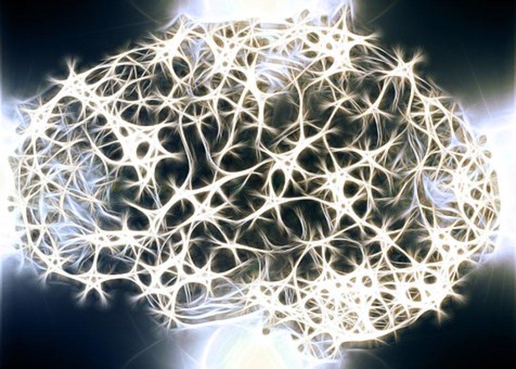 Neurons 1739997  340
